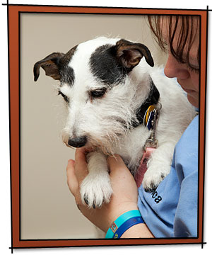 All Friends Animal Hospital Microchip Lost Pet ID by HomeAgain