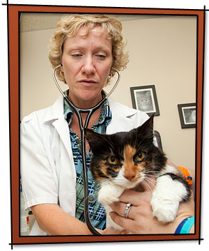 Veterinary Vaccines for Healthy Pets
